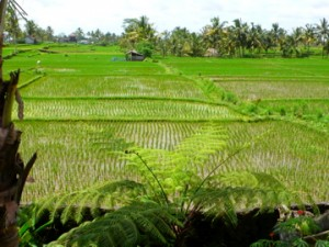 Earth nourished, Bali is as of now unaffected by the economic crisis