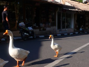 traffic on Dewisita Drive; Ubud, Bali
